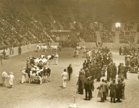 Farm Show Cattle Judging, 1940s